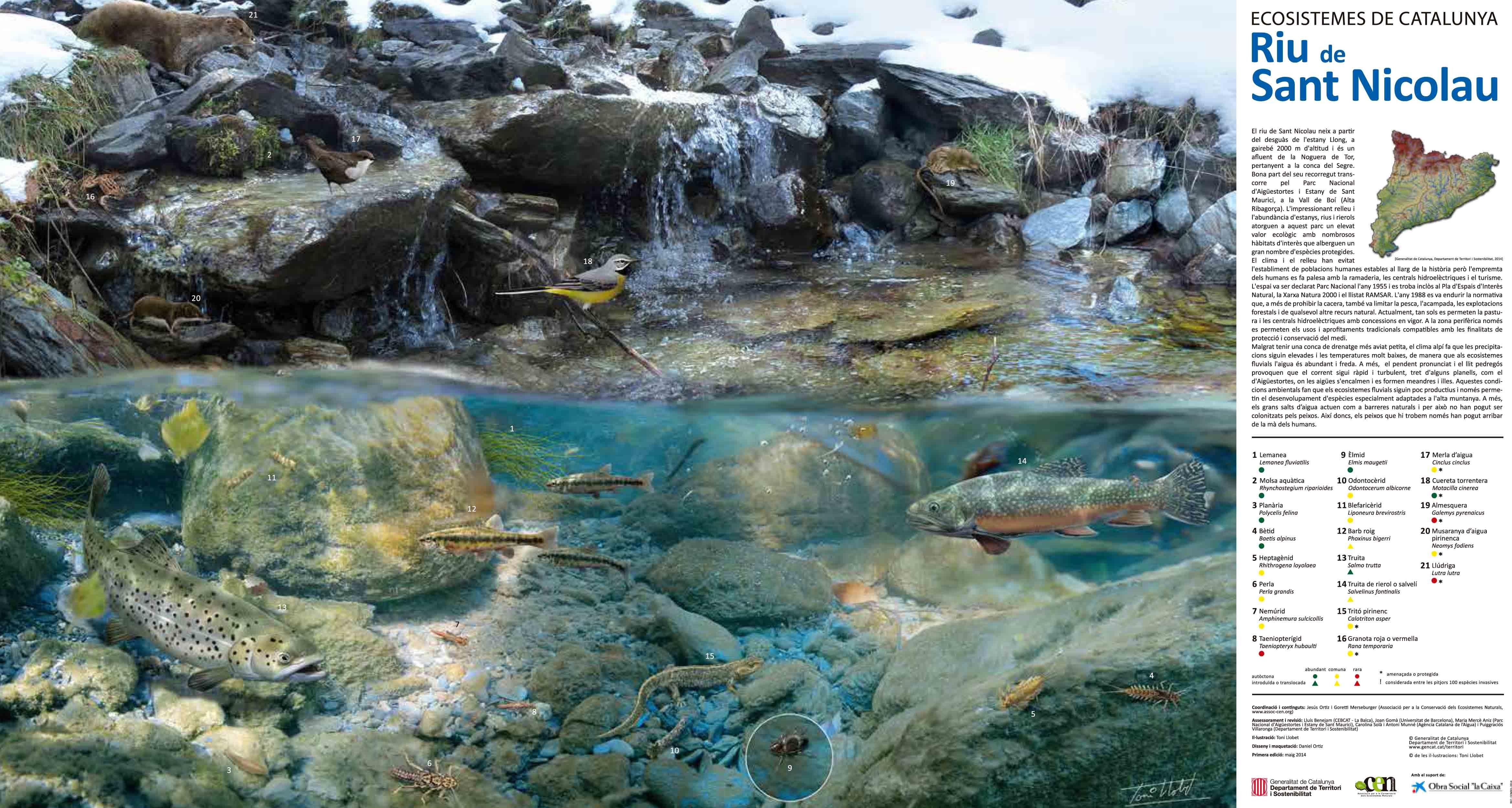 Riu de Sant Nicolau (baixa resolució)
